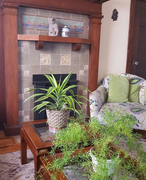 New Rescue Plants and Bohemian Style